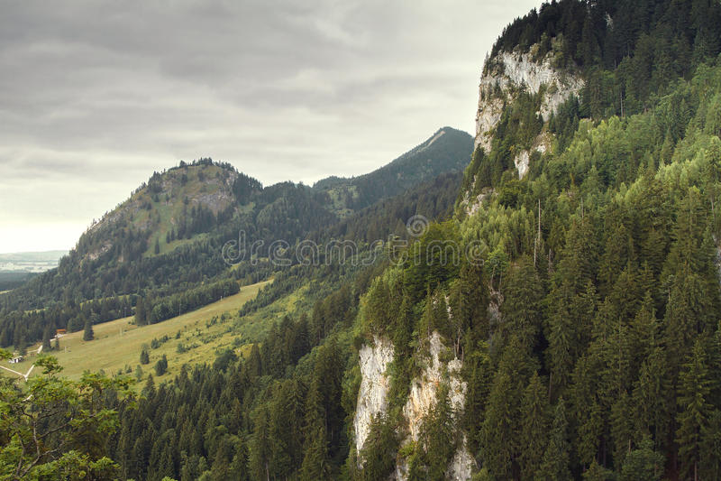 Skogen nära den Neuschwanstein slotten royaltyfri fotografi