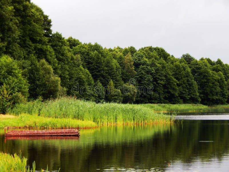 Skogen nära sjön arkivbild