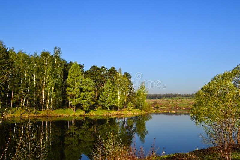Skogen och himmel reflekterade i det lugna blåa vattnet av den sjöForest Early morgonen royaltyfria bilder