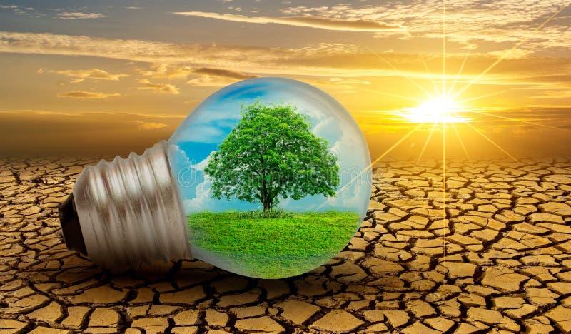 Skogen och träden är i ljuset Begrepp av miljövård och global uppvärmning planterar växande inre lampbul royaltyfri bild