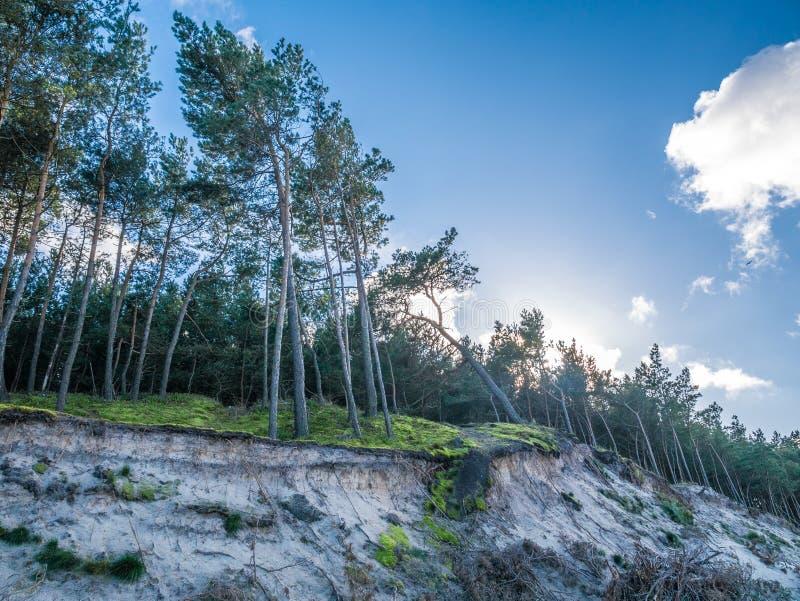 Skogen på en dyn i solljus royaltyfri bild