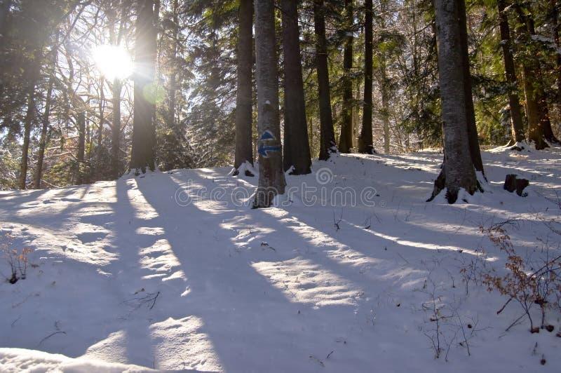 skogen rays sunen fotografering för bildbyråer