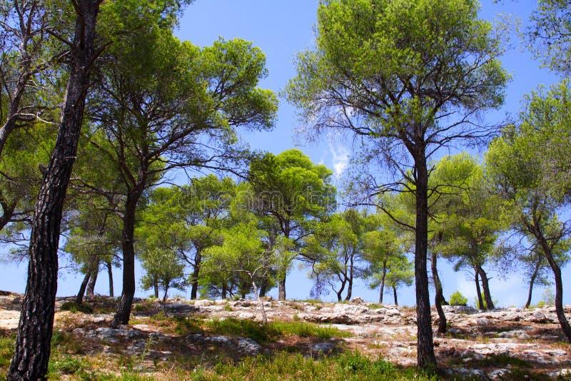 Download Skogen sörjer arkivfoto. Bild av natur, europa, torrt - 3544288