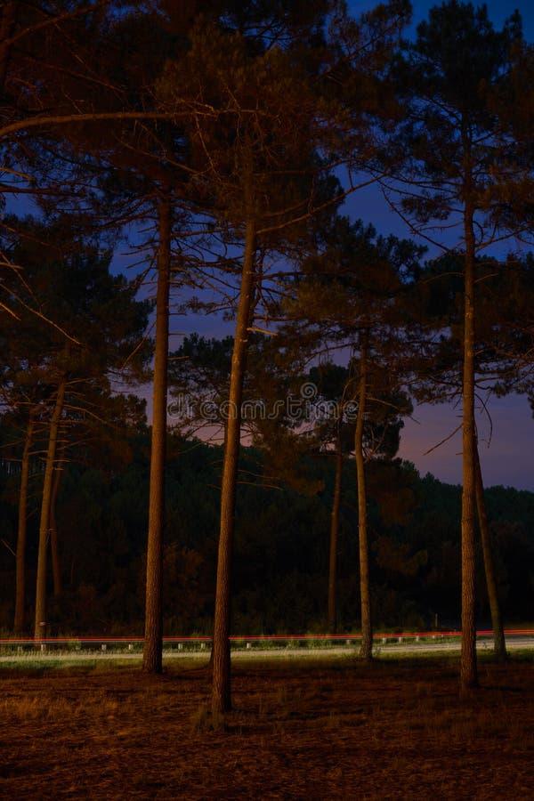Skogen sörjer natt royaltyfria foton