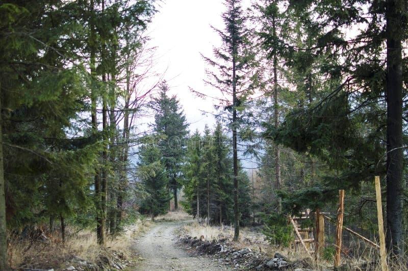 skogen sörjer vägen arkivfoto