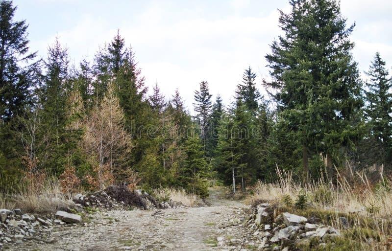 skogen sörjer vägen royaltyfri foto