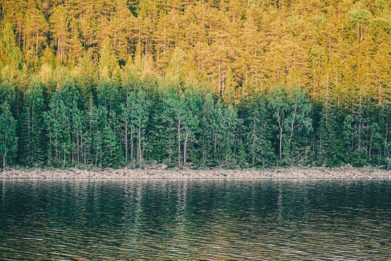 Skogen skuggas av ett berg på solnedgången vid vattnet royaltyfria foton