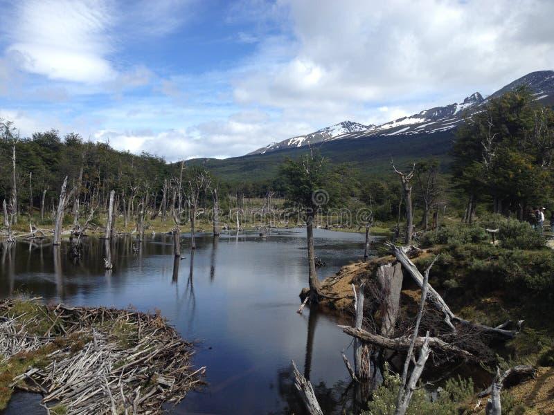 Skogen som skövlas av bäver i Ushuaia, Argentina royaltyfri foto