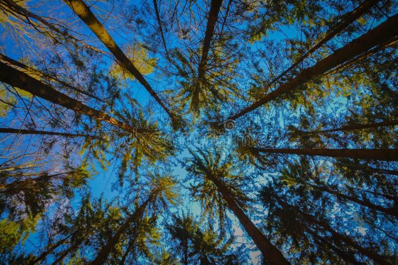 skogen sparar planeten royaltyfria foton