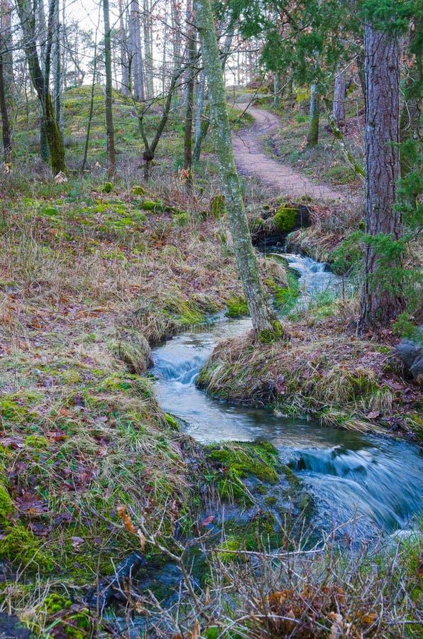 Skogen strömmer royaltyfri bild