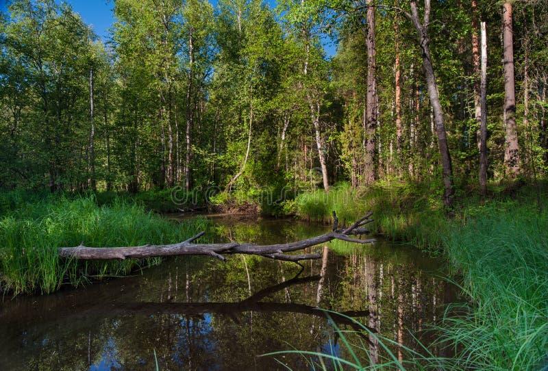 Skogen strömmer arkivbilder