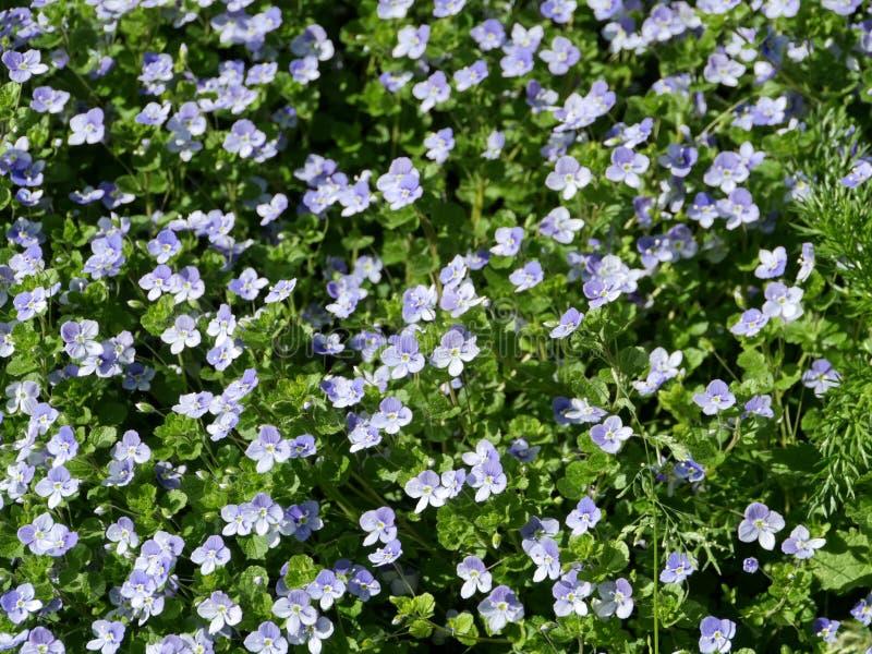 Skogen v?drade violett royaltyfri foto