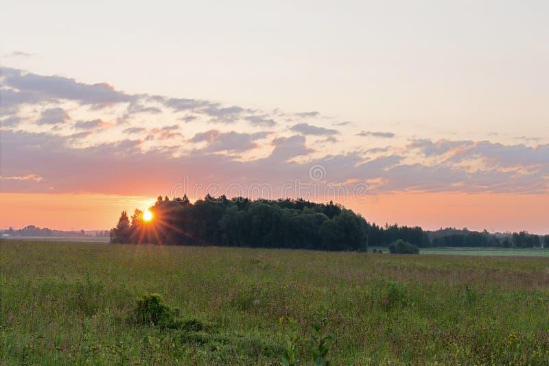 Skogens kant och flodängen i gryningen Solens strålar som går igenom träden royaltyfri fotografi