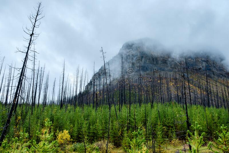 Skogens stora uppvaknande royaltyfria foton