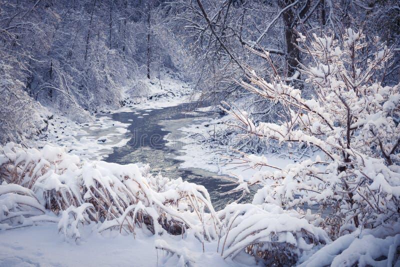 Skogflod i vintersnö arkivfoto