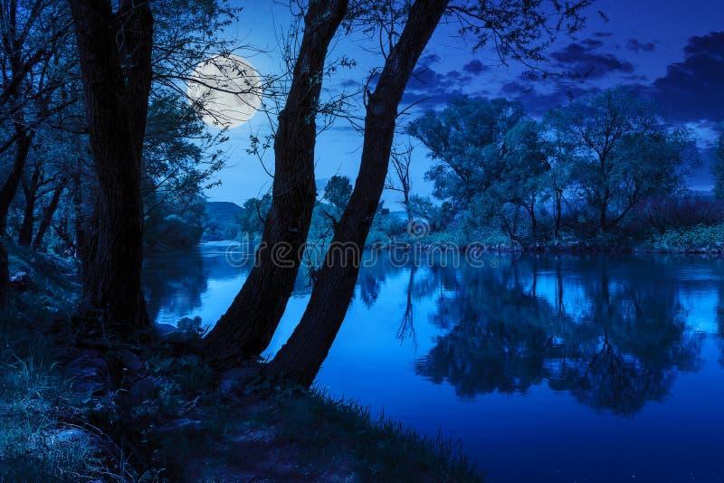 Skogflod med stenar och gräs på natten fotografering för bildbyråer