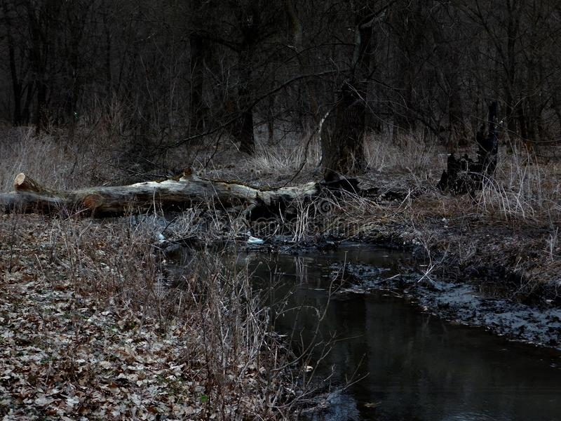 Skogflod på skymning royaltyfri fotografi