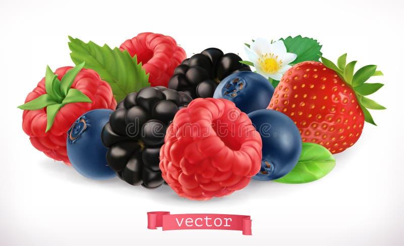 Skogfrukter och bär Hallon, jordgubbe, björnbär och blåbär vektor för symbol 3d stock illustrationer