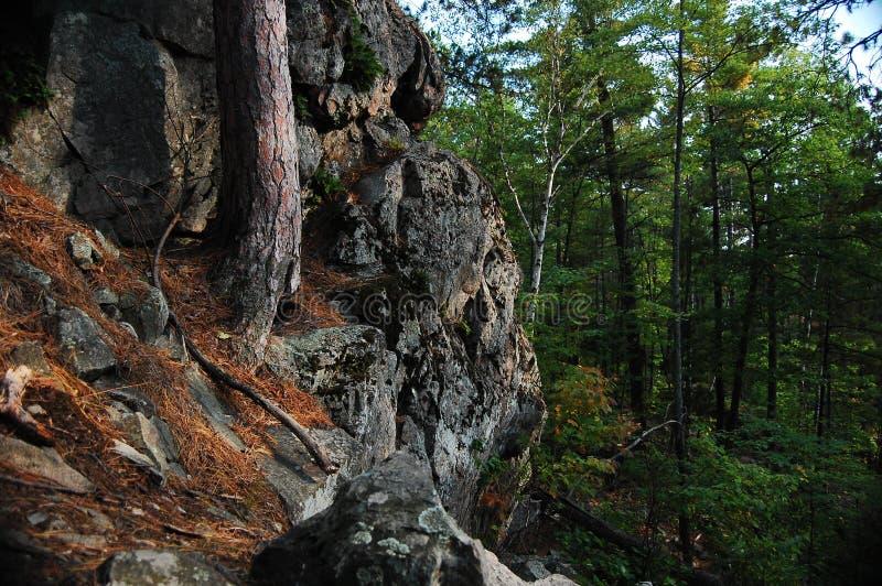 skoggeologi arkivfoton