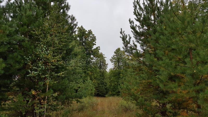 Skoggräsplan under den blåa himlen arkivfoto
