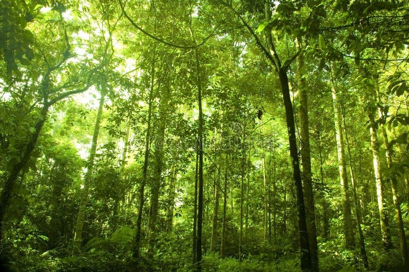 skoggreen royaltyfria bilder