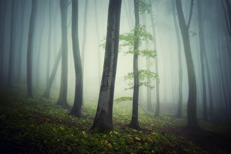 Skoghoträd i en mystisk kuslig spöklik dyster skog arkivfoto