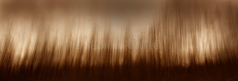 skogimpressionist