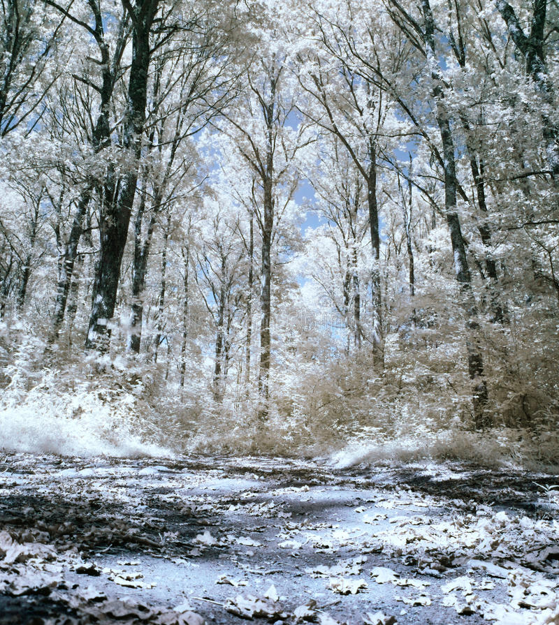 skoginfrared royaltyfria bilder
