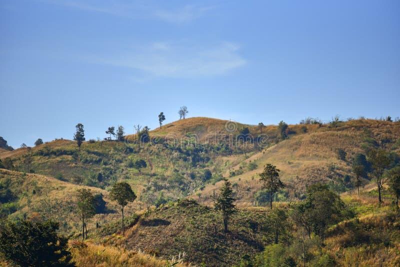 Skogingrepp fotografering för bildbyråer