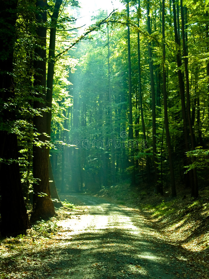skogiv arkivbilder