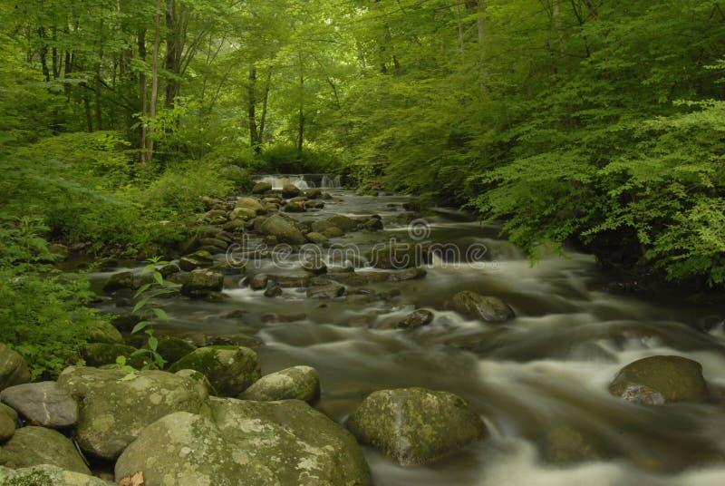 skogjersey ny flod arkivbilder