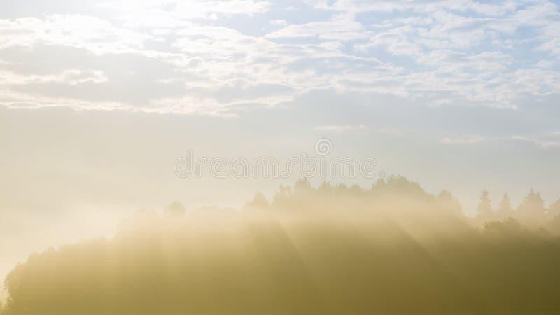 Skogkontur som kikar till och med tung dimma royaltyfria foton