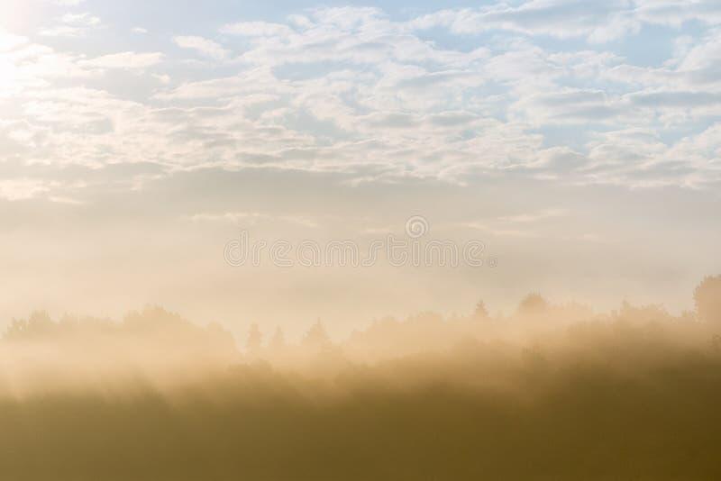Skogkontur som kikar till och med tung dimma arkivfoton