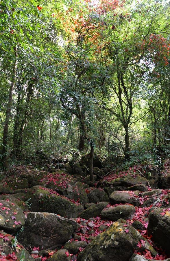 Skoglönn royaltyfria bilder