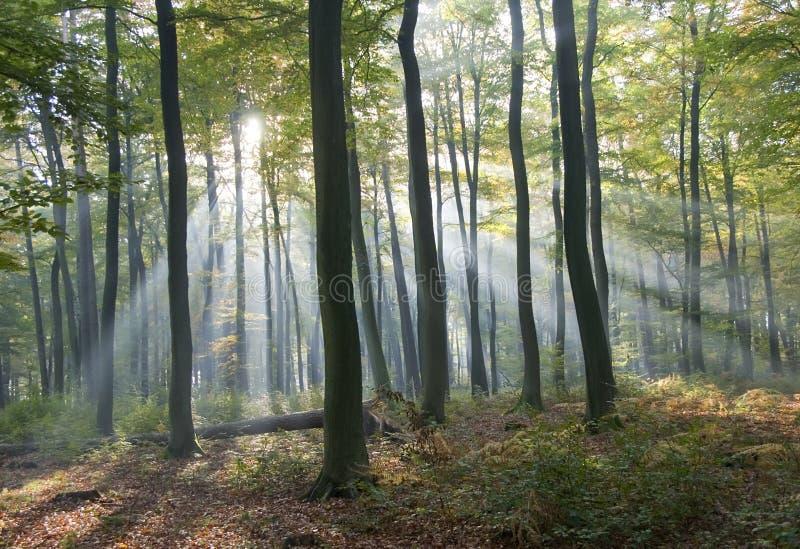 skoglampa arkivfoton