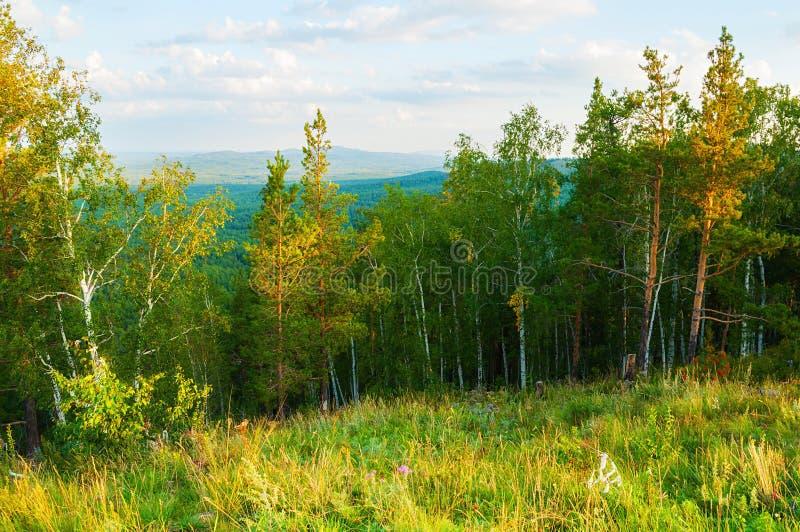 Skoglandskap med skogträd som växer på berglutningarna - natur för bergskogsommar arkivfoton