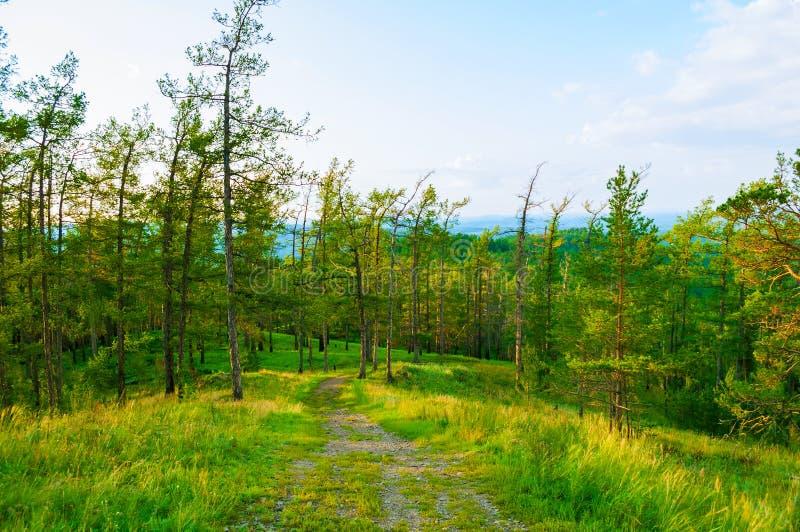 Skoglandskap med träd, berglutningar och banan under mjukt solnedgångljus royaltyfri foto