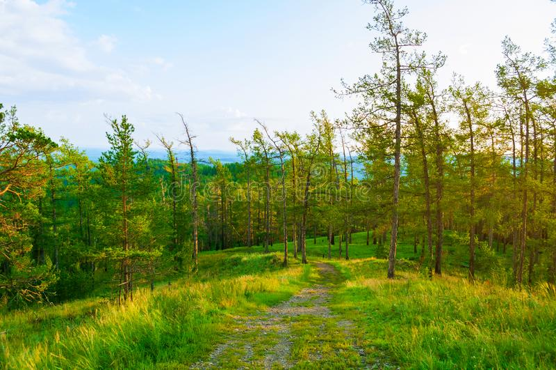 Skoglandskap med träd som växer på berglutningarna under mjukt solnedgångljus, skogbergnatur arkivfoton