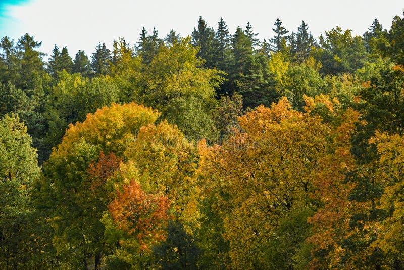 Skoglandskapet, träd som täckas med höst, färgar i Polen royaltyfria bilder