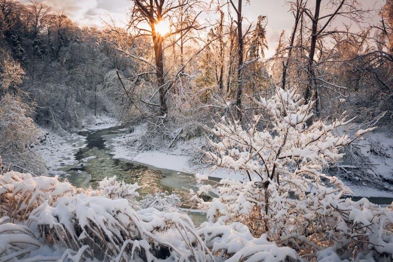 Skogliten vik efter vinterstorm arkivfoto