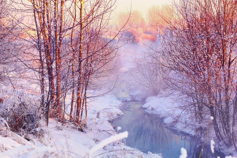 Skogliten vik i vinterskog