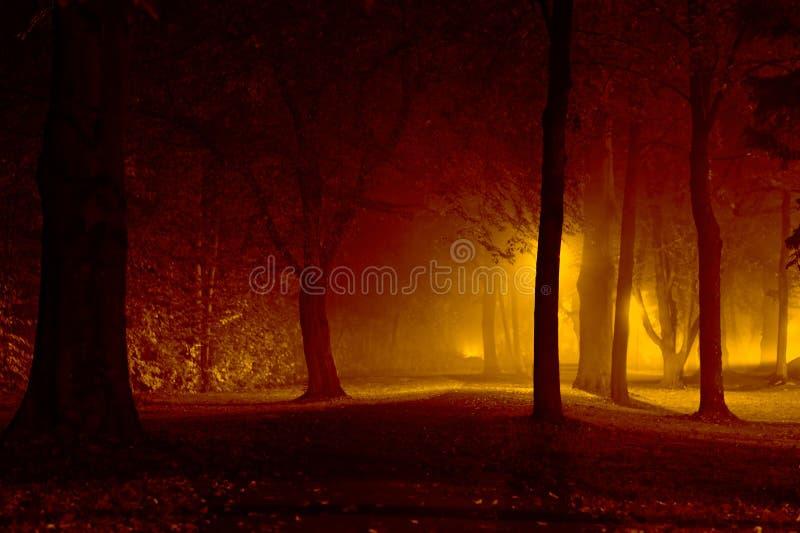skogmagi arkivfoto