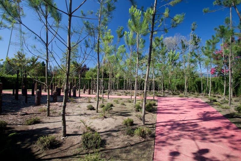 skogminnen royaltyfri bild