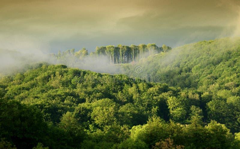skogmorgon arkivfoton