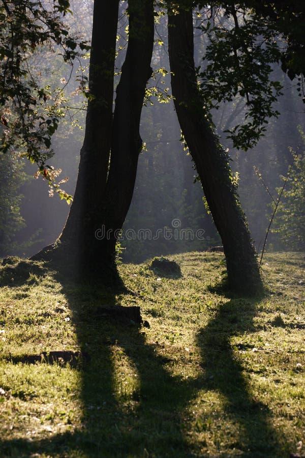 skogmorgon arkivfoto