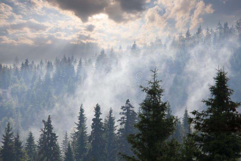 skogmorgonen sörjer royaltyfria foton