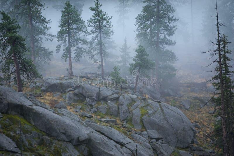 skognationalwenatchee royaltyfri foto