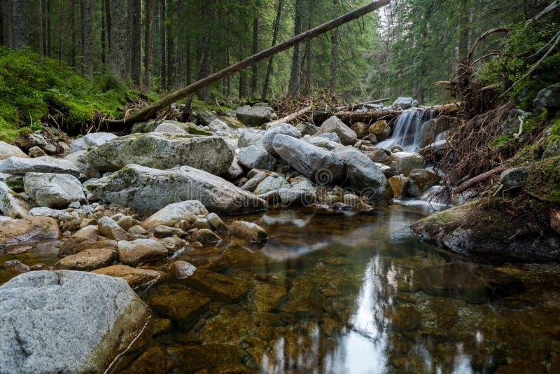 Skognaturvattenfall arkivbild
