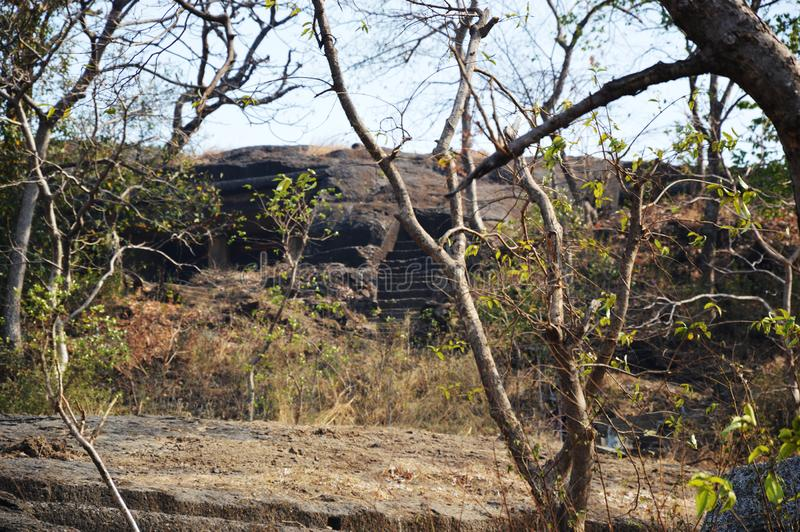 Skogområde i Mumbai Indien royaltyfri foto