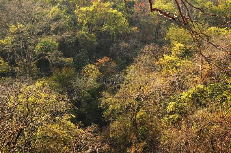 Skogområde i Mumbai Indien arkivfoton